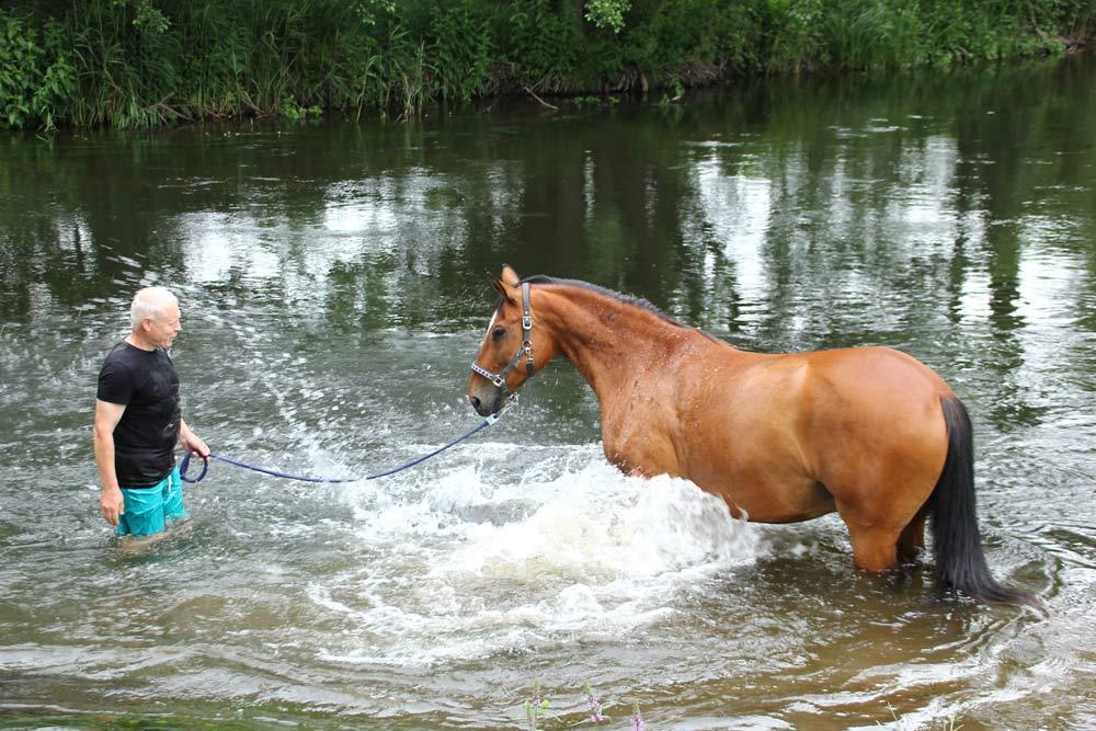 Abkühlung für die Pferde nach einem Ausritt